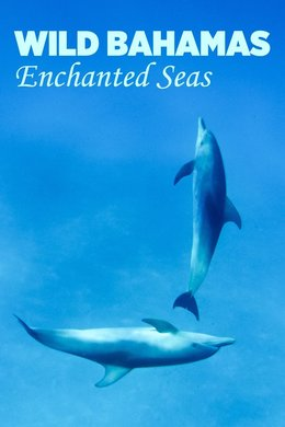 Wild Bahamas: Enchanted Seas