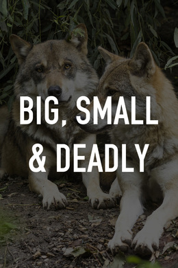 Big, Small & Deadly