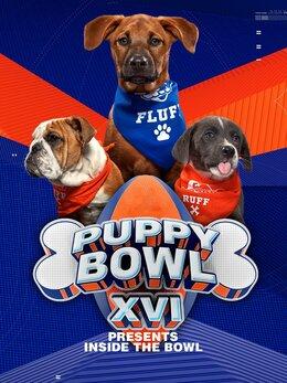 Puppy Bowl XVI Presents: Inside the Bowl