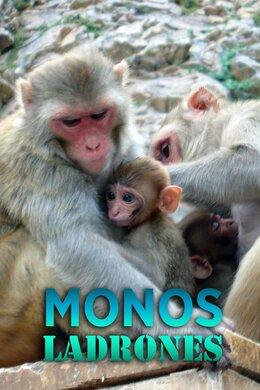 Monos ladrones
