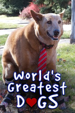 World's Greatest Dogs