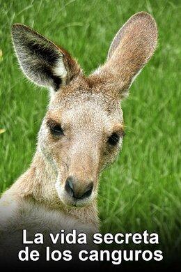 La vida secreta de los canguros