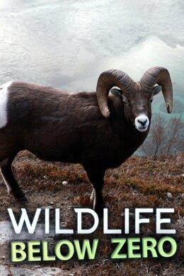 Wildlife Below Zero