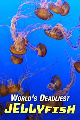 World's Deadliest Jellyfish