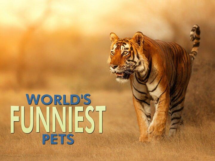 World's Funniest Pets