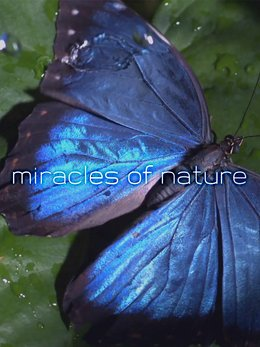 Miracles of Nature